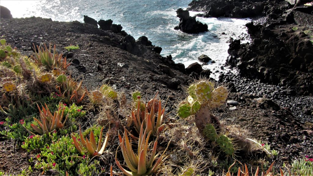 Aloe vera and cactus plants growing wild