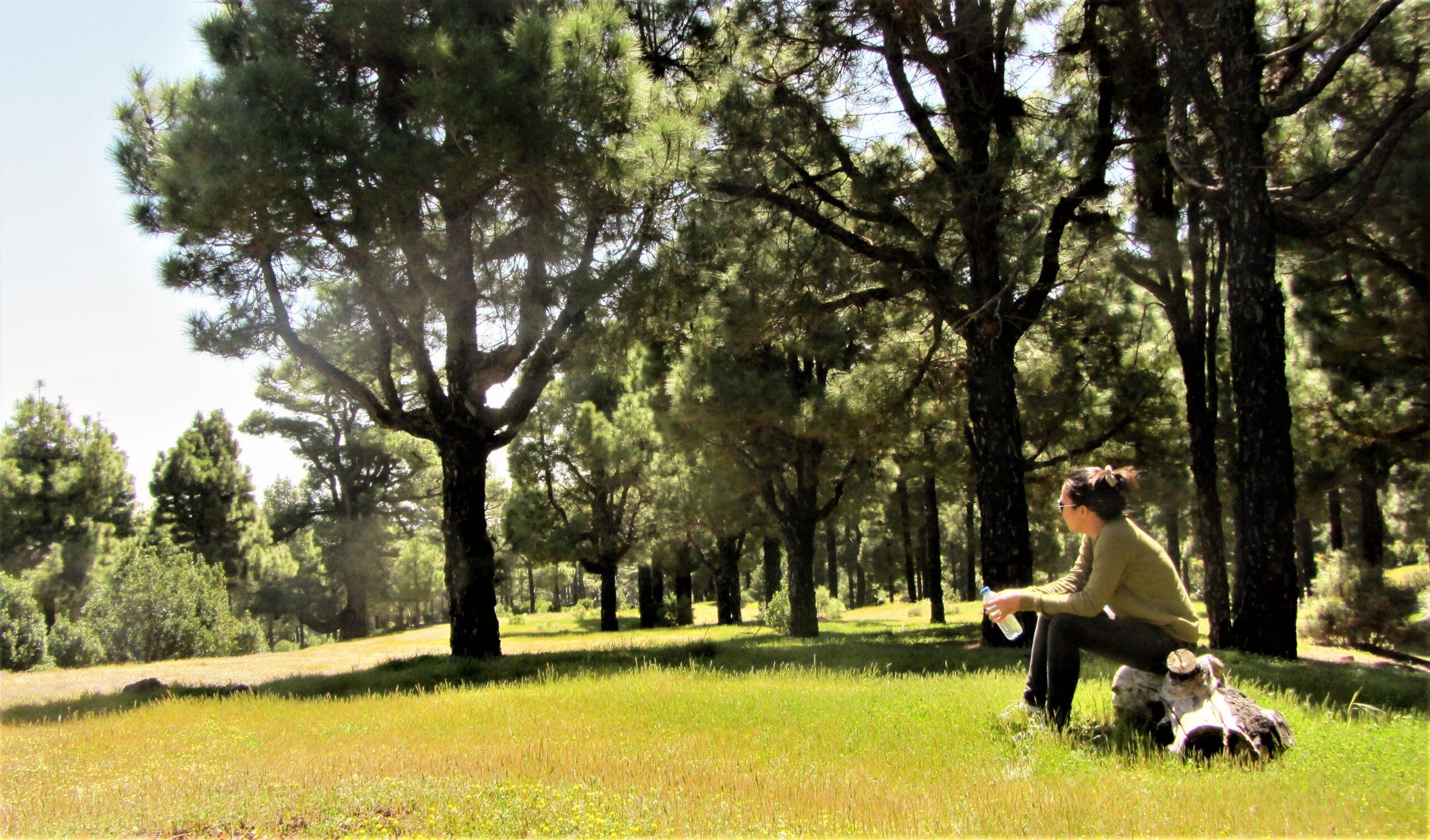 Forest in El Pinar